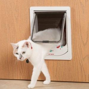 Gattaiole e reti per gatti
