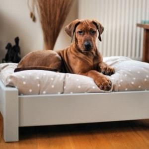 Lettini e brandine per cani
