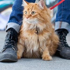 Pettorine per gatti e collari