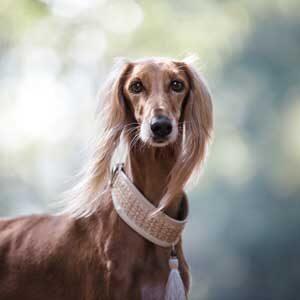 Collari e guinzagli per cani