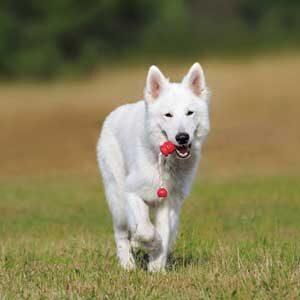 Giochi per cani e Sport